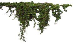 png plants - Google Search