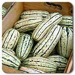 Organic Delicata Winter Squash