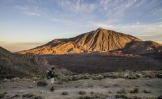 Canario, Fauna, Mount Rainier, Coast, Hiking, Explore, Mountains, Nature, Travel
