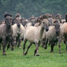 Rabid Horses In Germany! - 800×533