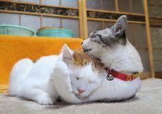 ヘッドロック - かご猫 Blog