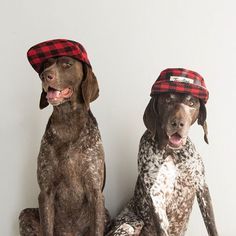Normcore Doggie Fashions : ifitwags