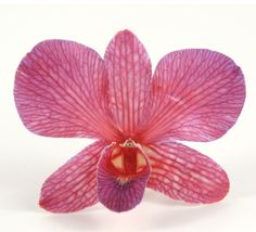 Cherry Sangria Orchids Preserved Whole Flowers (30 flowers/box)  $14.99  box/ 3 boxes $12 box