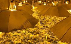 Three men charged after discovery of £1 million cannabis farm in 1980s nuclear bunker - Telegraph.co.uk