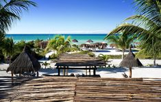 Ser Casasandra \ Mexico Palm Trees Beach, Seaside Resort, Most Beautiful Beaches, Beach Hotels, All Over The World, Mexico, Inspired, Gallery, Inspiration