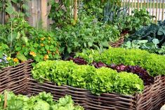 3 Oversized Planters You Can Make From Upcycled Items | HGTV Small Vegetable Gardens, Starting A Vegetable Garden, Vegetable Garden Design, Small Gardens, Vegetable Gardening, Easy Vegetables To Grow, Planting Vegetables, Organic Vegetables, Rotation Des Cultures