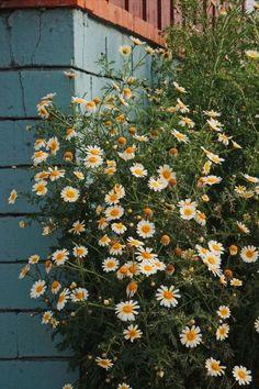 Aesthetic Pastel Wallpaper, Scenery Wallpaper, Aesthetic Backgrounds, Wallpaper Backgrounds, Aesthetic Wallpapers, Plant Aesthetic, Spring Aesthetic, Nature Aesthetic, Flower Aesthetic