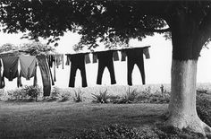 George Tice, Amish Clothes Line, Lancashire, Pennsylvania, 1966
