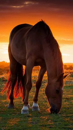Beautiful horse with a red glowing sunset shining through the horse's tail. Oh so pretty!