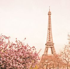 Eiffel Tower and Cherry Blossoms. <3