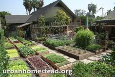 How To Urban Garden How to garden right, I so have to do this. The Farm, Small Farm, Natural Farming, Organic Farming, Organic Gardening, Modern Agriculture, Vertical Farming, Urban Homesteading, Grow Your Own Food