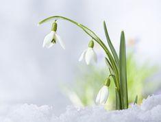 Ešte včera bola zima, a dnes je už pekná jar, Poberaj sa, starec marec, Ta, kam išiel február... 30 básničiek o roztopenom snehu, o prvých kvietkoch, o slniečku a všetkom, čo k jari patrí.