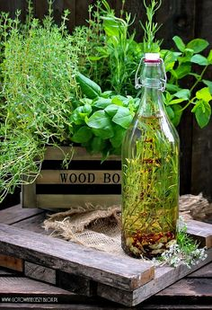 Olive Oil Infused with Fresh Herbs Spices And Herbs, Fresh Herbs, Herb Shop, Herbal Essences, Healing Herbs, Edible Garden, Vegetable Garden, Garden Landscaping, Herbalism