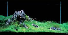 A planted tank in the Iwagumi Japanese style.  I would love to try my hand at one of these someday.