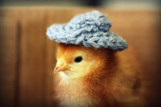 Chicks in Hats Magnet This Will Make Your by chicksinhats on Etsy, $3.00