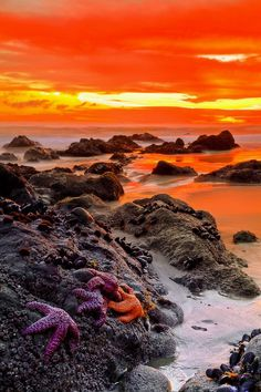 Sunset over rocky water's edge with starfish in foreground  | nature | | sunrise |  | sunset | #nature  https://biopop.com/