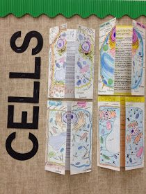 Comparing cells foldable