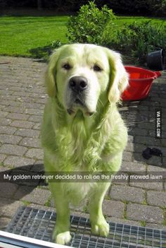 And now he's green!