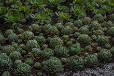 Se reproducen muy fácil lo q hizo que este conjunto de suculentas nos inspiraran a crear este jardín.  No te puerdas todo el proyecto. Succulents, Plants, Create, Succulent Plants, Flora, Plant