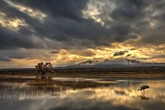 On Golden Pond - Sunset at the North Pond of Bosque del Apache.