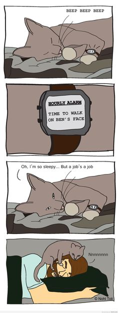 awesome My cats sleep schedule