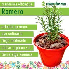 Les compartimos la ficha de cuidados del Romero, para que tus plantas estén siempre sanas y hermosas. Si todavía no tenés tu planta de Romero podes comprarla online haciendo click en el siguiente link: http://raizmadre.com/shopping.php?id_producto=213 #aromaticas #huerta #romero #jardineria #jardin #raizmadre