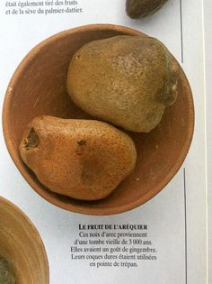 Areca fruit, or betel nuts, from a 3000 year old tomb. Eyewitness Books: Egypt.