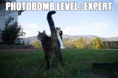 cat butt photobomb