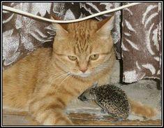 GATER10: http://ramrock.wordpress.com/2014/12/19/ternura-maternal-felina/