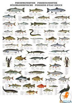Infografías de peces 19
