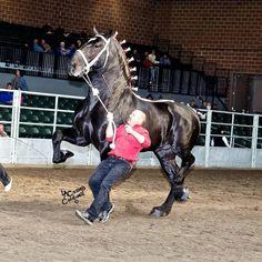 Любовь Лошадей, Породистые Лошади, Милые Животные, Фильм Прекрасные Создания, Лошадиные Породы, Лошади, Дикие Лошади, Импрессионизм, Скульптура