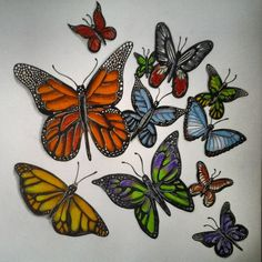Finished: A Cluster of Butterflies.  #doodle #doodles #doodlepicture #doodleart #instadoodle #art #artist #artonig #instaartist #drawing #draw #picture #original #pens #pencil #Sharpie #Unipin #pencil #colour #butterflies #butterfly #nature