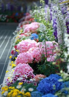 A Few Of My Favorite Things  Just a Magical Border of colour bursting forth.