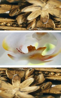 """Gold Framing Orchids""  by tela-design from the tela 100 collection: 3 pieces, free dimensions, materials e.g. canvas , wallpaper, glass, metal, ceramic etc. 10 more combinations  under   http://www.tela-design.com/en/design/tela_100.html   ""Gold Framing Orchids""  von tela-design aus der tela 100 Kollektion: 3-teilig, freie Grössen, für z.B. Leinwand auf Keilrahmen, Tapete, Folie, Glas, Metall, Keramik, HPL etc. 10 weitere Kombinationen unter…"