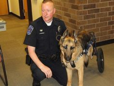 Major was paralyzed in the line of duty as a K-9 officer and adopted by his family afterwards.