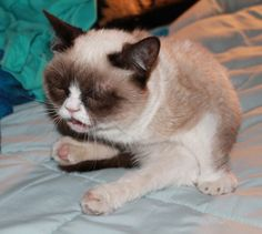 cats about to sneeze - Imgur