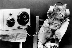 A cat wearing headphones to listen to a radio, January 1926. Photo courtesy of Getty Images.