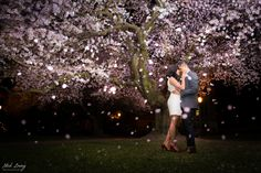 UW Cherry Blossom engagement - by Seattle based wedding photographer Nick Leung