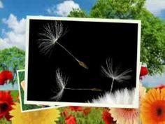 De-as avea in mana o chitara... Dandelion, Flowers, Youtube, Plants, Dandelions, Plant, Taraxacum Officinale, Royal Icing Flowers, Flower