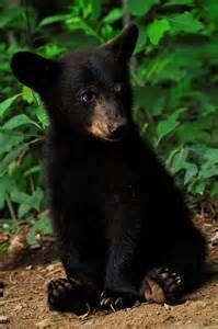 ourson noir - Ecosia