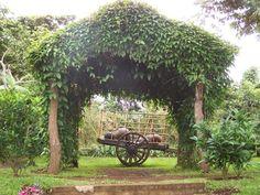 """Celeste´s Garden Hotel, Apaneca, El Salvador   """"Hotel El Jardin de Celeste"""". Photo by: Ana Silva"""