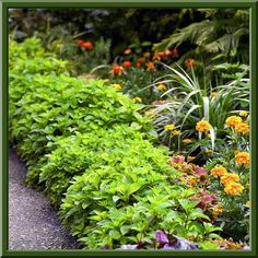 Integrate Your Plants - put fragrant herbs along bed borders because the arrive early, stay late and provide nice aroma.