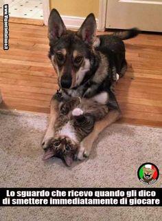 Sembrano come #bambini beccati in flagrante! #vignette #immagini #divertenti #italiano #cani #gatti ( www.VignetteItaliane.it ) >>> se ti piace, condividila