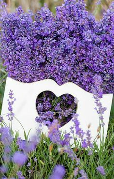 Purple flowers are a great way to add interest to your yard or landscape. See some of our favorite purple garden flowers! Lavender Cottage, Lavender Garden, Lavender Blue, Lavender Fields, Lavender Flowers, Beautiful Flowers, Purple Garden, Lavender Hidcote, Types Of Purple Flowers
