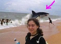 The Funniest Animal Photobombs Ever (PHOTOS)#s627423&title=Fake_Shark_Bomb