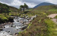 Cairngorm Nationalpark: Vandring, oplevelser og kultur | 26. juni – 3. juli 2014 - Munonne