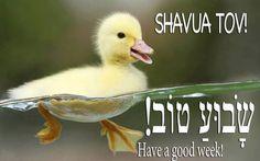 Have a Good Week Hebrew   Sha-vu-a Tov = Have a good week = שבוע טוב