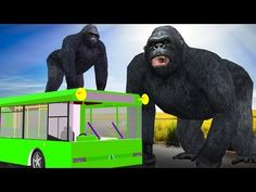(20) Gorilla Wheels On The Bus Rhyme | Animals Wheels On The Bus | Children Songs | Rhymes For Kids - YouTube