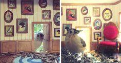 Esta mujer construye diminutas casitas para los pájaros que la visitan   Bored Panda
