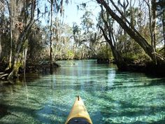 Florida Nature Adventures: Crystal River - Kayaking for Manatees - Can't wait to be hereeeeeee!